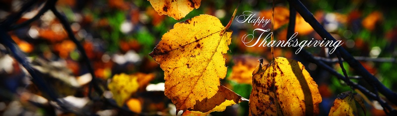 autumn-leaves-thanksgiving-day-website-banner-image
